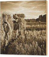 Rice Harvesting Wood Print