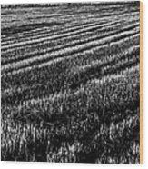 Rice Paddies Wood Print