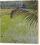 Rice Paddy Wood Print
