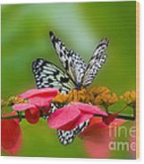 Rice Paper Butterflies Wood Print