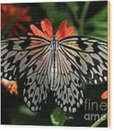 Rice Paper Butterfly Elegance Wood Print