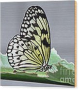 Rice Paper Butterfly On A Leaf Wood Print