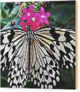Rice Paper Butterfly On Pink Wood Print