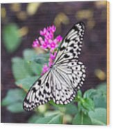 Rice Paper Butterfly Opulent Amenities 2 Wood Print