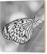 Rice Paper Butterfly Resting For A Second Wood Print