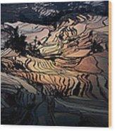 Rice Terrace Field Of Yuan Yang Wood Print