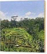 Rice Terrace In Bali Wood Print