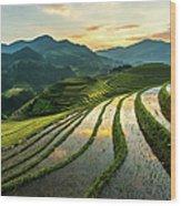 Rice Terraces At Mu Cang Chai, Vietnam Wood Print