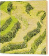 Rice Terraces Wood Print