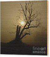 Richmond Park 12 Wood Print