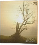 Richmond Park 13 Wood Print