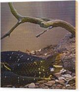 Ridgenosed Rattlesnake 3 Wood Print