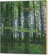 Ridgeway Trees Wood Print