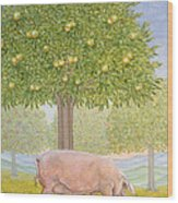 Right Hand Orchard Pig Wood Print