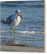 Ring-billed Gull With Its Catch Wood Print