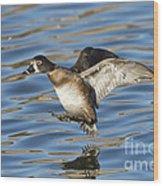 Ring-necked Duck Landing Wood Print