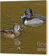 Ring-necked Duck Pair Wood Print