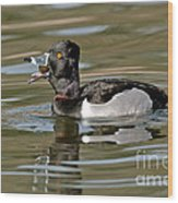 Ring-necked Duck Swallowing Snail Wood Print