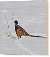 Ring Necked Pheasant Wood Print