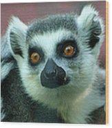 Ring Tailed Lemur-2 Wood Print