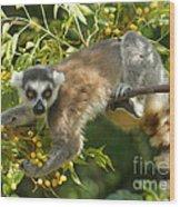 ring-tailed lemur Madagascar 1 Wood Print