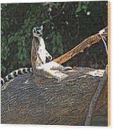 Ring Tailed Lemur Wood Print