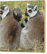 Ring-tailed Lemurs Lemur Catta Wood Print