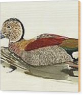 Ringed Teal Wood Print