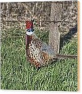 Ringneck By A Fence Post Wood Print