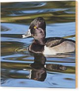 Rings Around Ring-necked Duck Wood Print