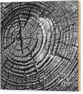 Rings Of Life Wood Print
