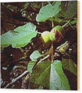 Ripe Figs Wood Print