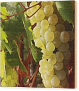Ripe Grapes Wood Print by Alex Sukonkin