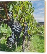 Ripe Grapes Right Before Harvest In The Summer Sun Wood Print