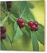 Red Berries Botanical Christmas Art Wood Print