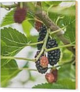 Ripe Mulberry On The Branches Wood Print