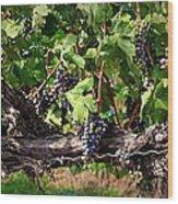 Ripening Grapes Wood Print