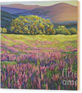 River Bank Lupines In California Wood Print