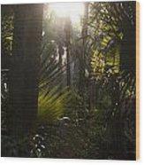 River Bend Park 1 Wood Print