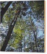 River Bend Park 3 Wood Print
