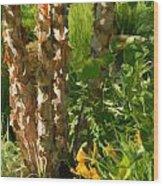 River Birch Wood Print