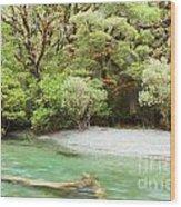 River In Rainforest Wilderness Of Fiordland Np Nz Wood Print