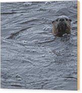 River Otter   #0695 Wood Print