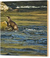 River Otter On A Rock Wood Print