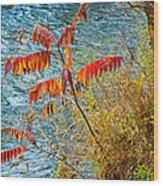 River Sumac Wood Print