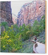 River Walk In Zion Canyon In Zion Np-ut Wood Print