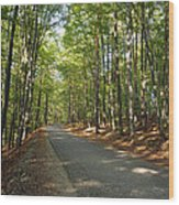 Road In Forest  Wood Print
