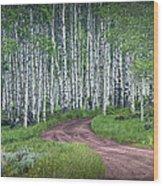 Road Through A Birch Tree Grove Wood Print