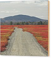 Road Through Autumn Blueberry Maine Wood Print by Scott Leslie