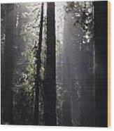 Road Through Redwoods Wood Print